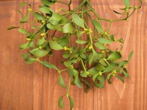 mistletoe-1902593__340