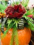 Flower of the Day – In aPumpkin